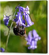 Buzzy Bee On Bluebells Canvas Print