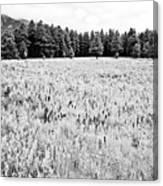Bw Meadow Canvas Print