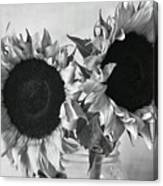 Bw Sunflowers #002 Canvas Print