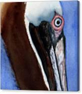 Bwon Pelican Eye Canvas Print