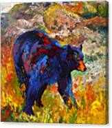 By The River - Black Bear Canvas Print