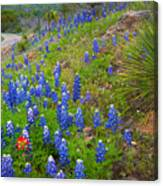 Hill Country Yucca Canvas Print
