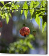 Red Papery Covering Over Its Fruit Canvas Print