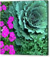 Cabbage And Vinca Canvas Print