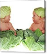 Cabbage Kids Canvas Print
