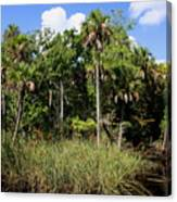 Cabbage Palms Along The Cotee River Canvas Print