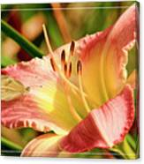 Cabbage White Butterfly On Day Lily Canvas Print