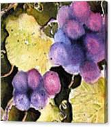 Cabernet Harvest 2 Canvas Print