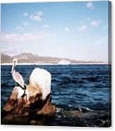 Cabo San Lucas Pelican Canvas Print