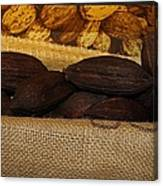 Cacao Pods Canvas Print