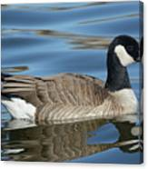 Cackling Goose Canvas Print
