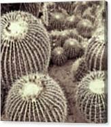 Cacti Community Canvas Print