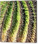 Cacti Needles Canvas Print