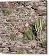 Cacti Twins Canvas Print