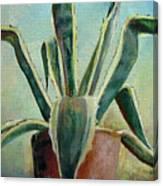 Cactus 2 Canvas Print