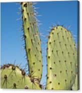 Cactus Against Blue Sky Canvas Print