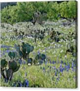 Cactus And Willow-wildflowers Of Texas Canvas Print