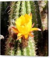 Cactus Bloom 033114a Canvas Print