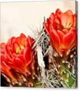 Cactus Bloom 033114m Canvas Print