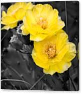 Cactus Blossom Canvas Print