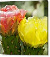 Cactus Bouquet Canvas Print