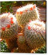 Cactus Buds Canvas Print