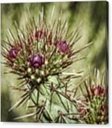 Cactus Buds Canvas Print