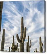 Cactus Choir Canvas Print