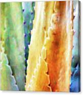 Cactus Detail #1 Canvas Print