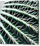 Cactus Detail Canvas Print