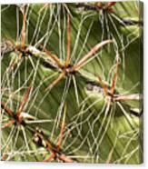 Cactus Diagonal Pattern Canvas Print