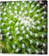 Cactus Feathers Canvas Print