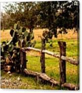 Cactus Fence Line Canvas Print