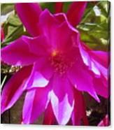 Cactus Flower 1 Canvas Print