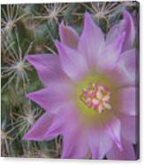 Cactus Flower #2 Canvas Print