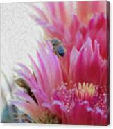 Cactus Flower And A Busy Bee Canvas Print