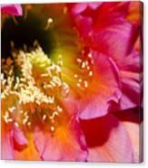 Cactus Flower Close Up Canvas Print
