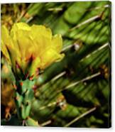 Cactus Flower H28 Canvas Print