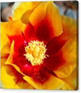Cactus Flower V Canvas Print