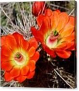 Cactus Flower Twins Canvas Print