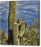 Cactus Home Canvas Print