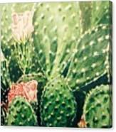 Cactus In Blossom  Canvas Print