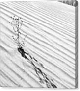 Cactus In Desert Canvas Print