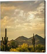 Cactus Morning Canvas Print