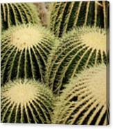 Cactus Party Canvas Print