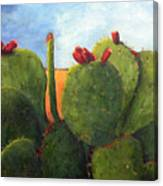 Cactus Pears Canvas Print