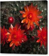 Cactus Red Flowers Canvas Print