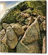 Cactus Rock Canvas Print