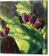 Cactus Shadows Canvas Print