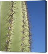 Cactus Side View Canvas Print